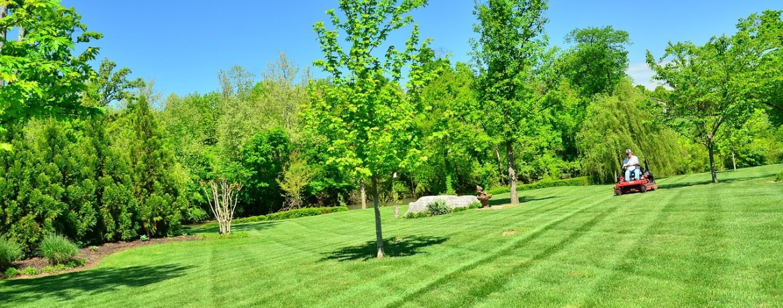 Pagrindinės gražios vejos taisyklės - DELFI Gyvenimas